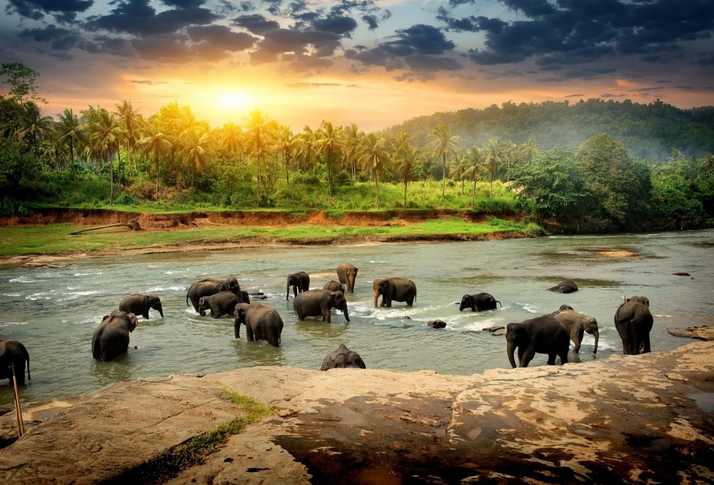 Sri Lanka is filled with just about every type of landscape